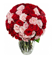 50 Blooms of Pink and Red Roses  Online Order to Cebu Philippines