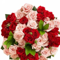 send 3 dozen roses to philippines