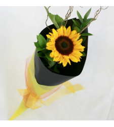 Single Sunflowers