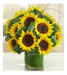 Sun-Sational Sunflowers-12 Stems