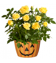 send halloween happiness mini rose plant to cebu city