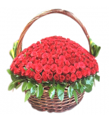 100 Fresh Red Roses in a Special Basket
